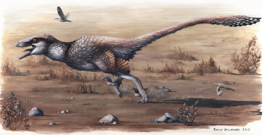 Dakotaraptor reconstruction by Emily Willoughby, from the published paper.