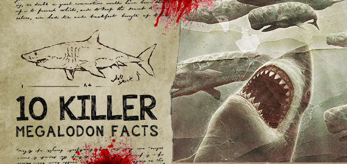 Top 10 Facts about the Megalodon  Fun Facts You Need to