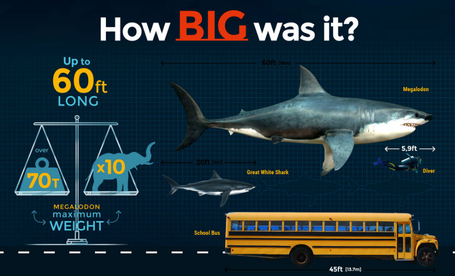 The worlds biggest babysitters How sperm whales use