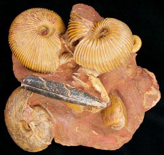 indeks fossiler bruges til __________ dating er teddy og spencer virkelig dating