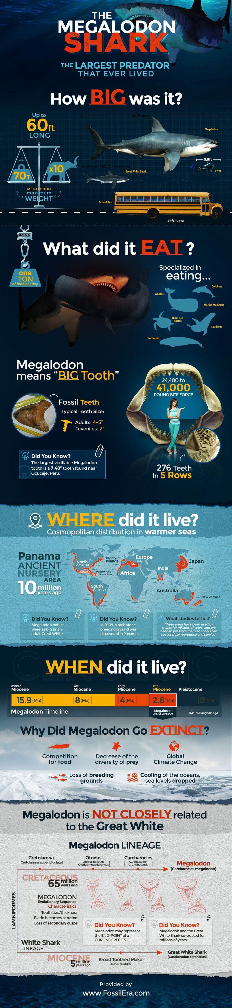 Megalodon Shark Infographic