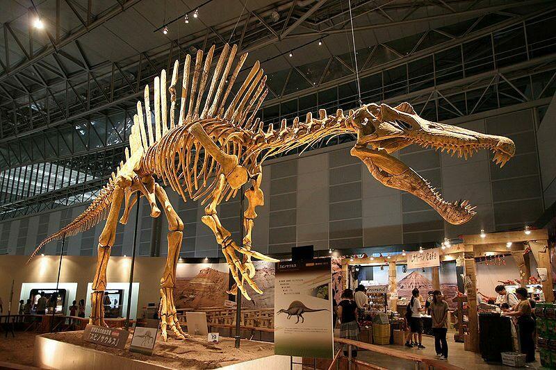 800px-Spinosaurus_skeleton.jpg