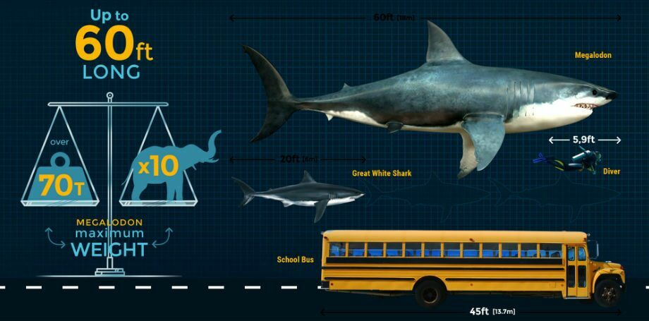 Megalodon size how big was the megalodon shark fossilera megalodon size altavistaventures Image collections
