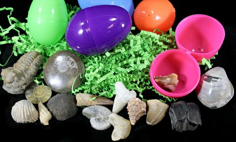 Fossils Filled Easter Eggs