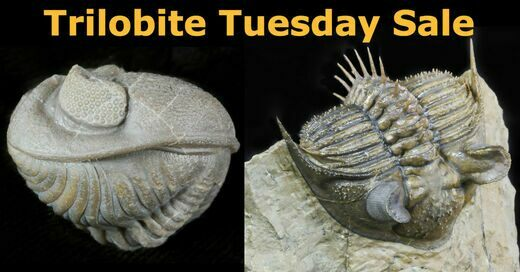 Trilobite Tuesday