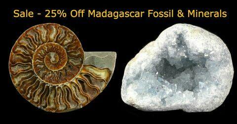 Madagascar Sale