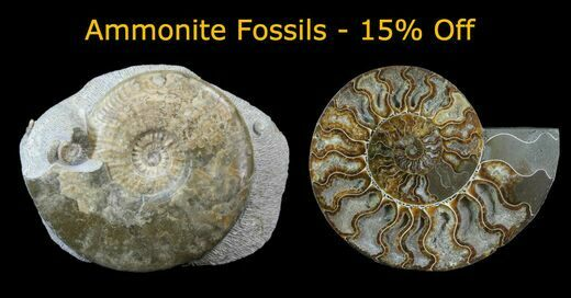 Ammonite Wednesday