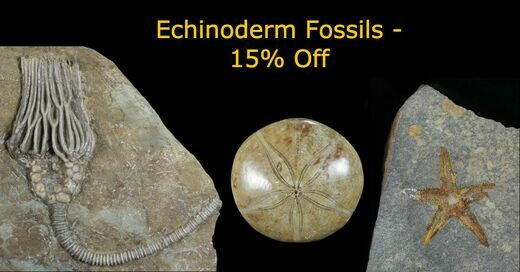 Echinoderm Thursday