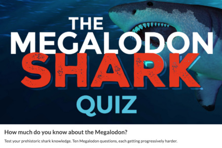 Megalodon Size How Big Was The Megalodon Shark Fossilera Com