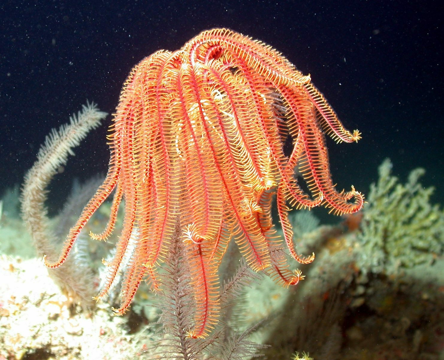 About Crinoids