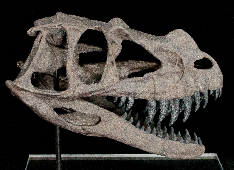 43d38893b96f Miniature 3D Printed Ceratosaurus Skull Replica For Sale - FossilEra.com
