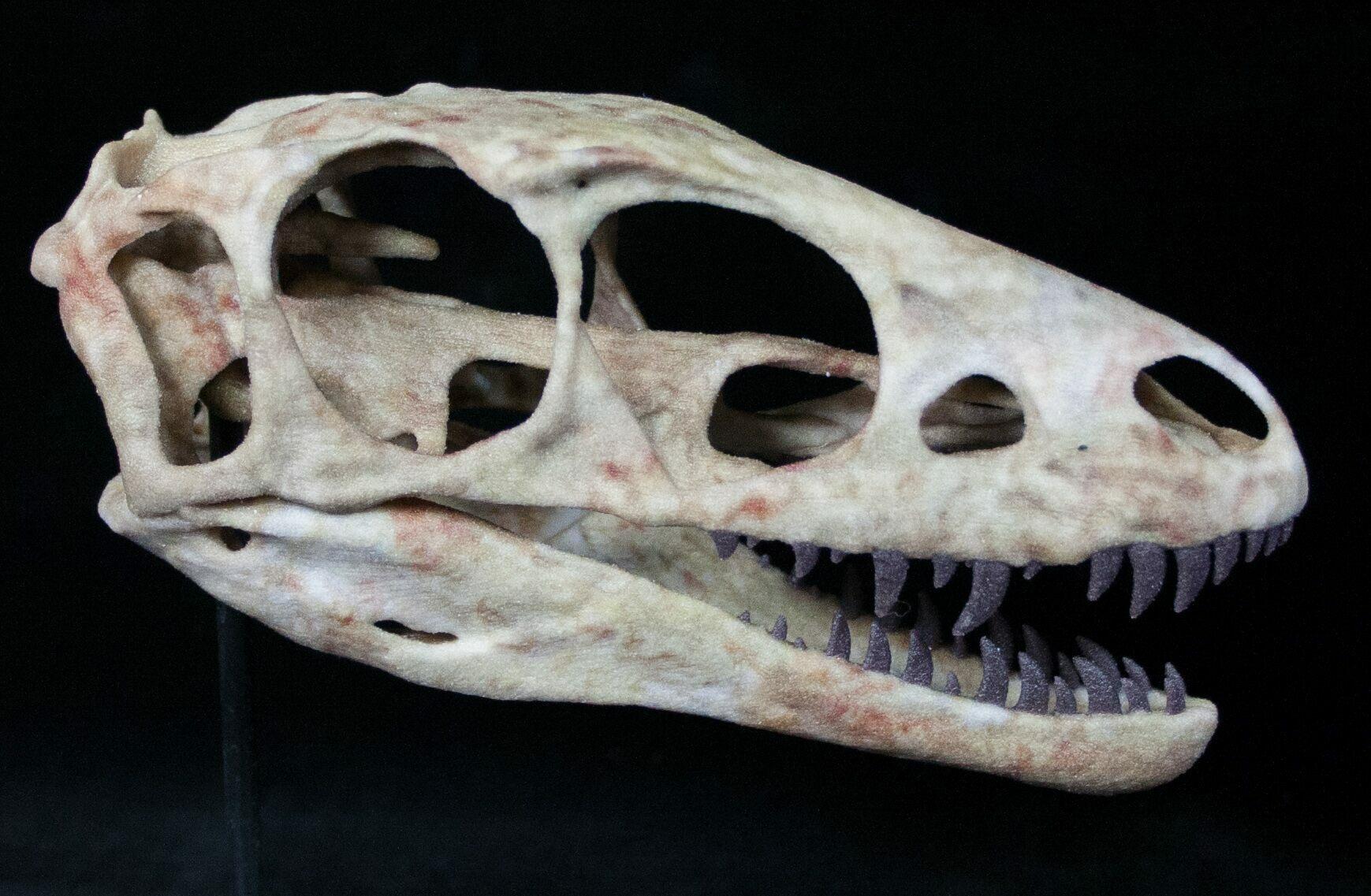 73af4bd5b0e6 Miniature 3D Printed Raptorex (Tyrannosaur) Skull Replica For Sale ...