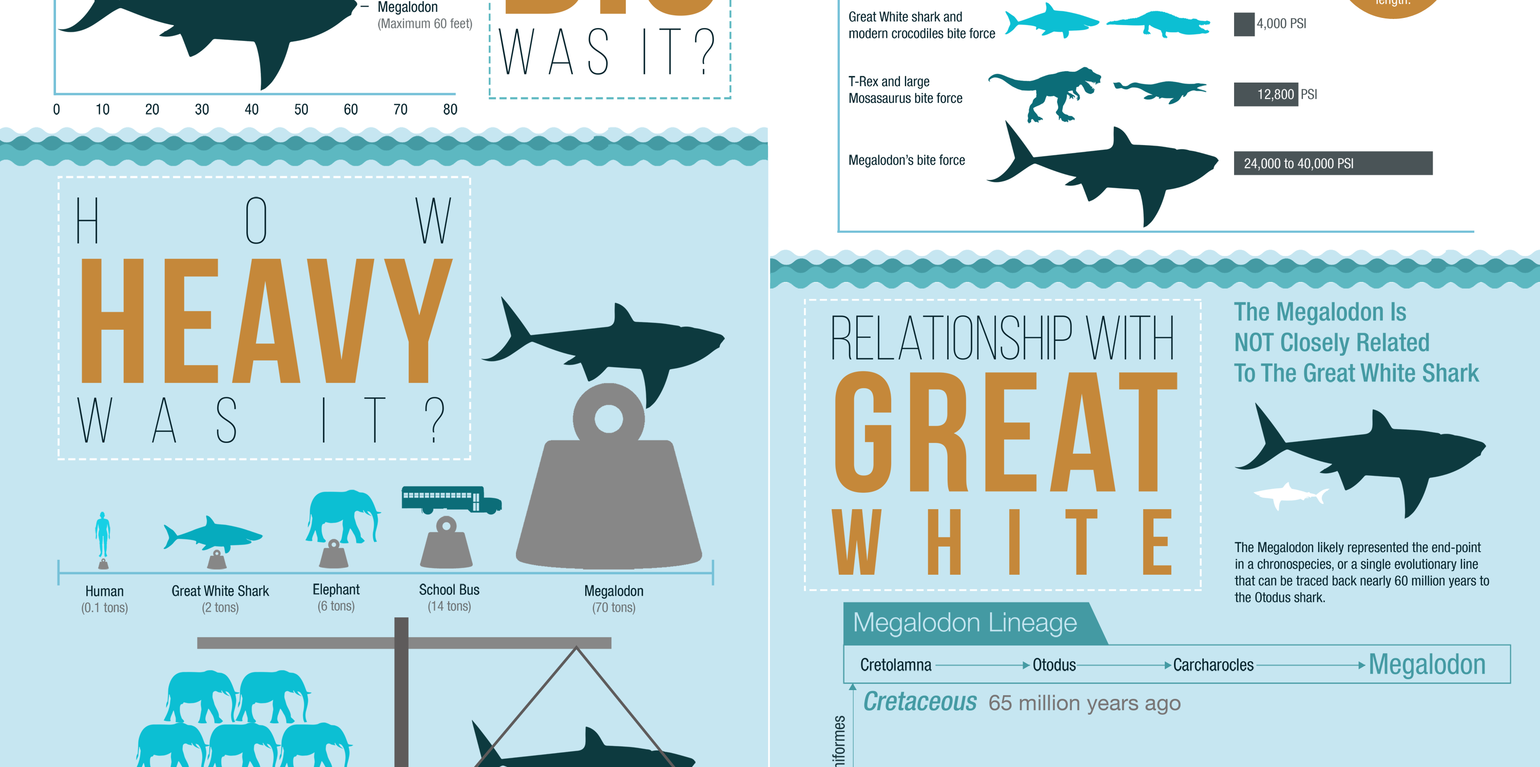 "24x36"" Megalodon Infographic Poster (Matte) For Sale ..."