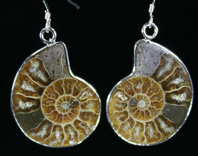 d0d98c295 Stylish Fossil Ammonite Earrings For Sale (#26559) - FossilEra.com