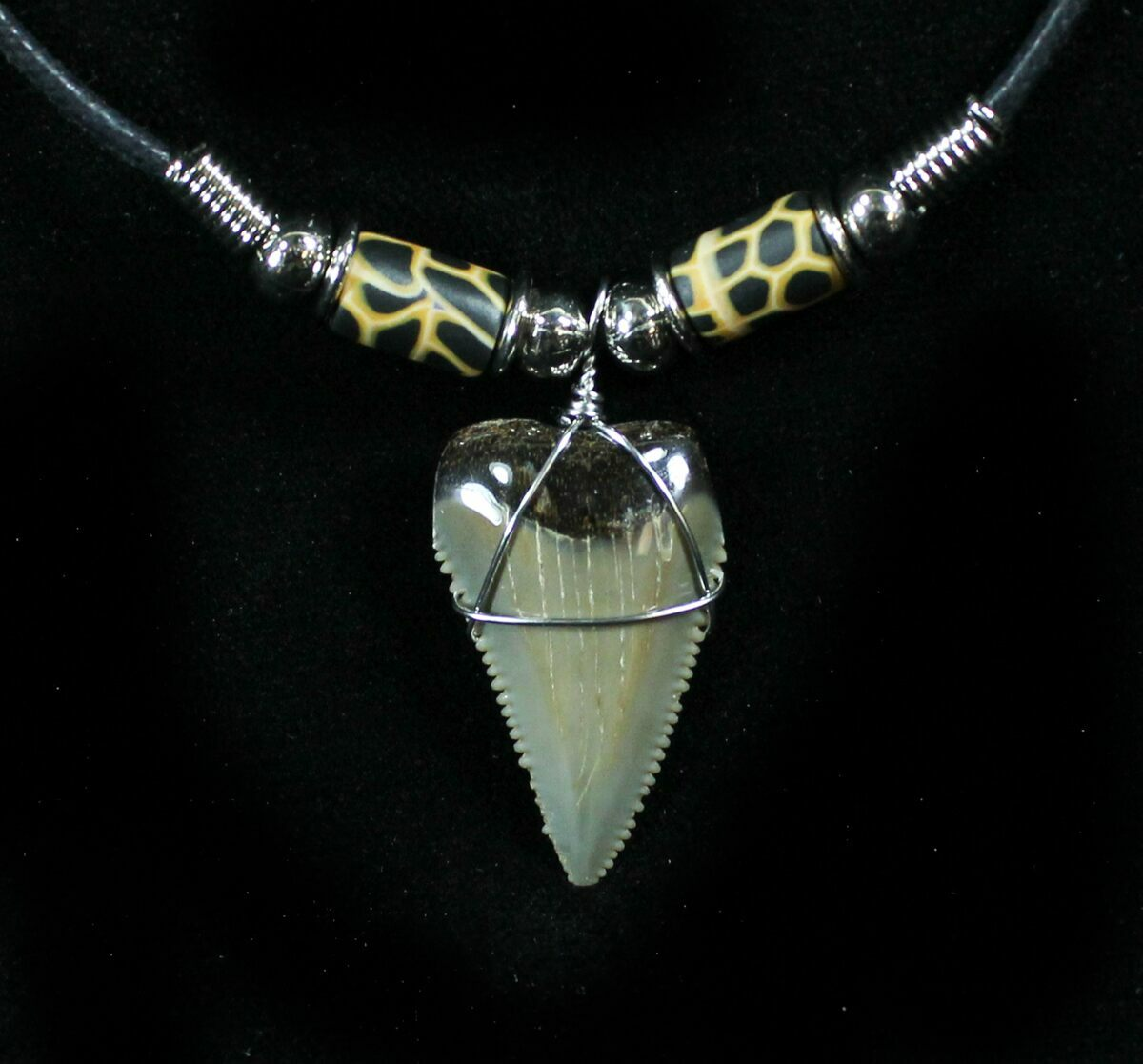 Serrated fossil great white shark tooth necklace for sale 27076 serrated fossil great white shark tooth necklace 27076 1 aloadofball Gallery