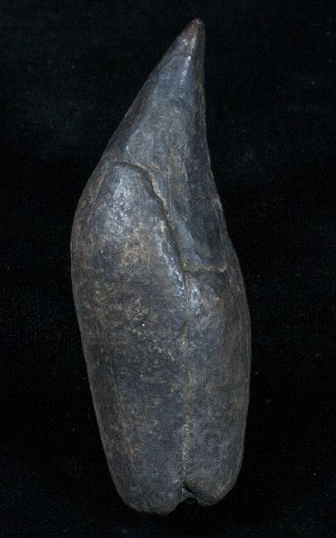 Seems very petrified whale sperm
