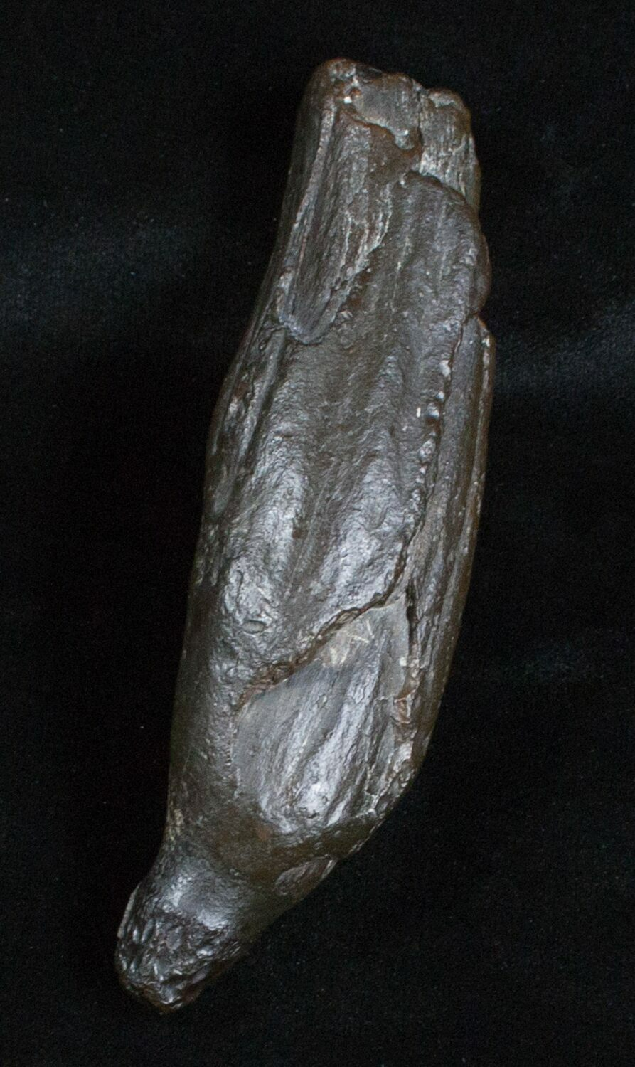 Your petrified whale sperm remarkable, very