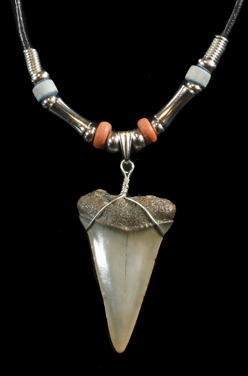 1 7 fossil mako shark tooth necklace for sale 43058