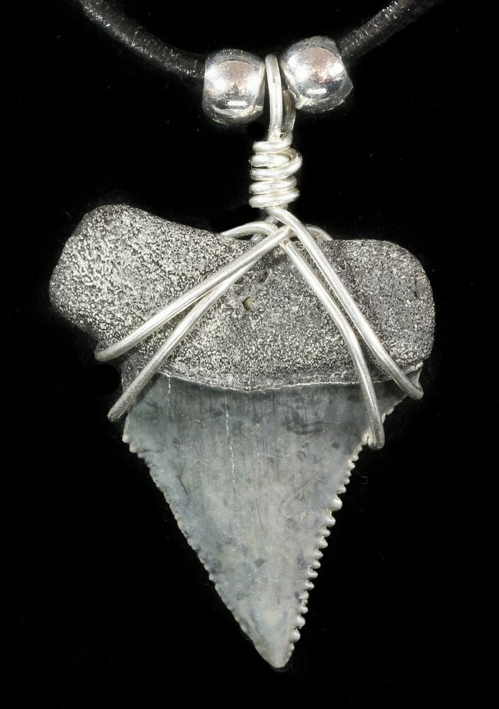 white Shark tooth necklace and pendant