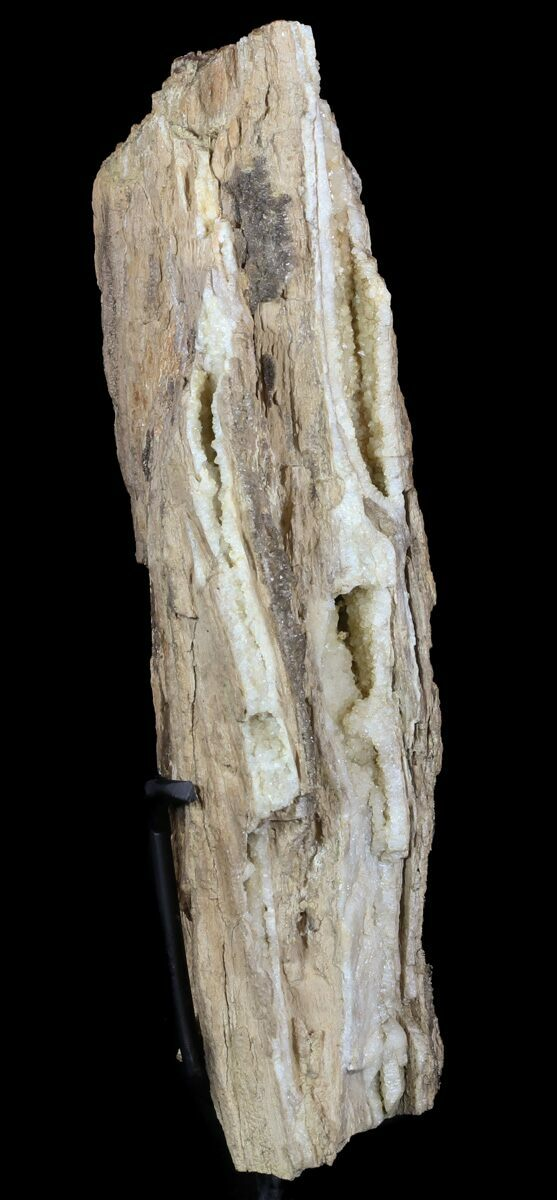 10 Quot Cretaceous Petrified Wood Section On Stand Texas For