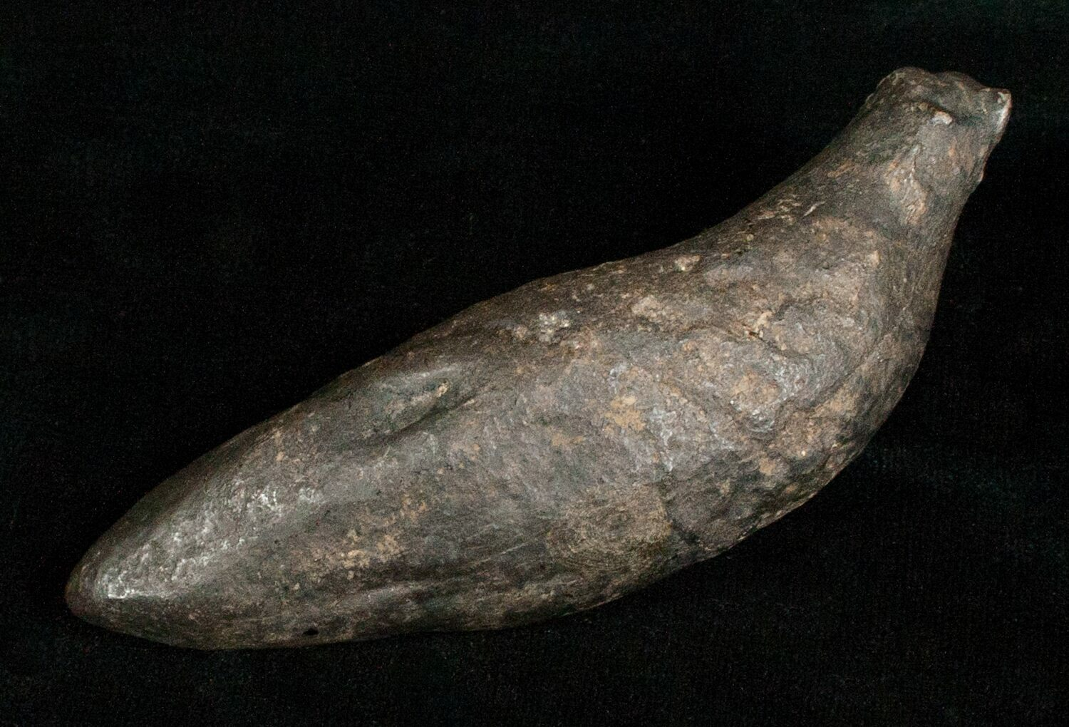 Fossil sperm whale