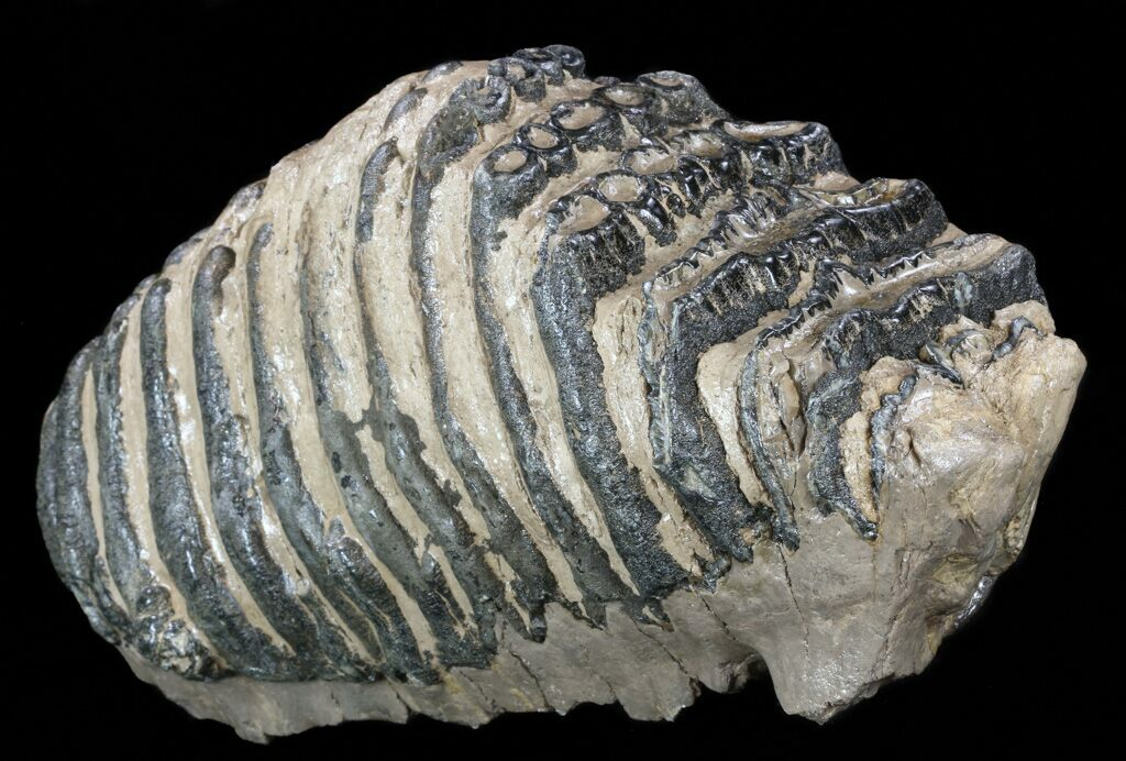 Fossils for sale for Bulk river rock for sale near me