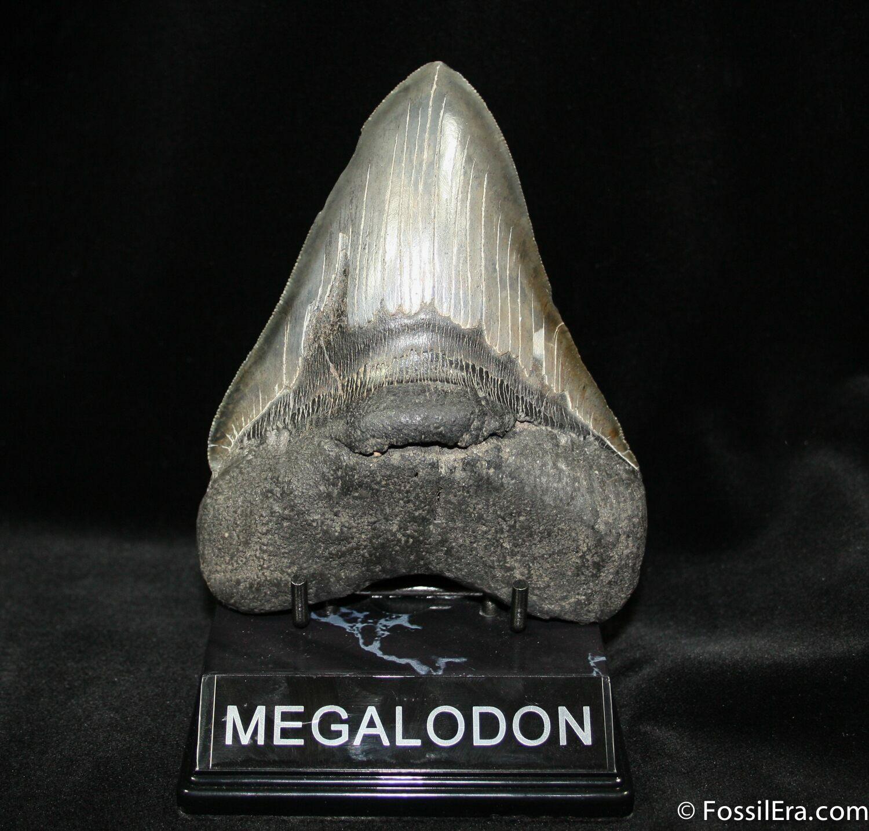 Giant Shark Megalodon ...
