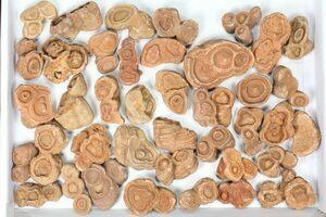 Wholesale Fossils, Crystals & Minerals - FossilEra com