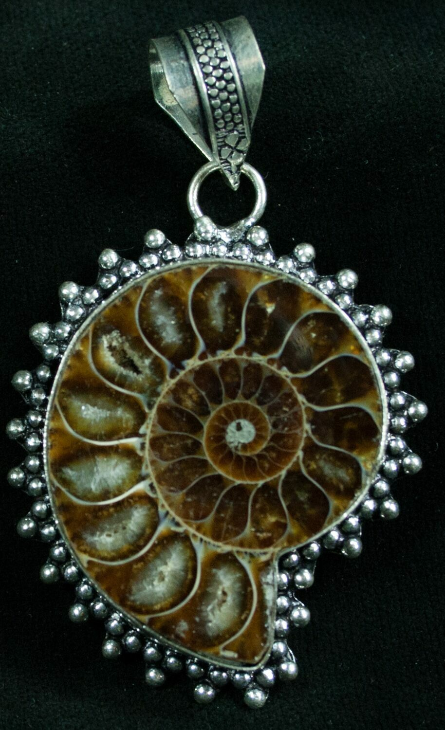 Fossil ammonite pendant 110 million years old for sale 8284 fossil ammonite pendant 110 million years old aloadofball Images