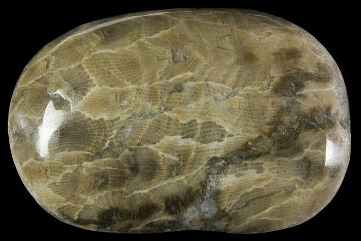 BEAUTY 4.2 Polished Petoskey Stone #106 Coral Fossil Hexagonaria Pure Michigan Gift Lake House Home Decor Cottage Display Rock Art