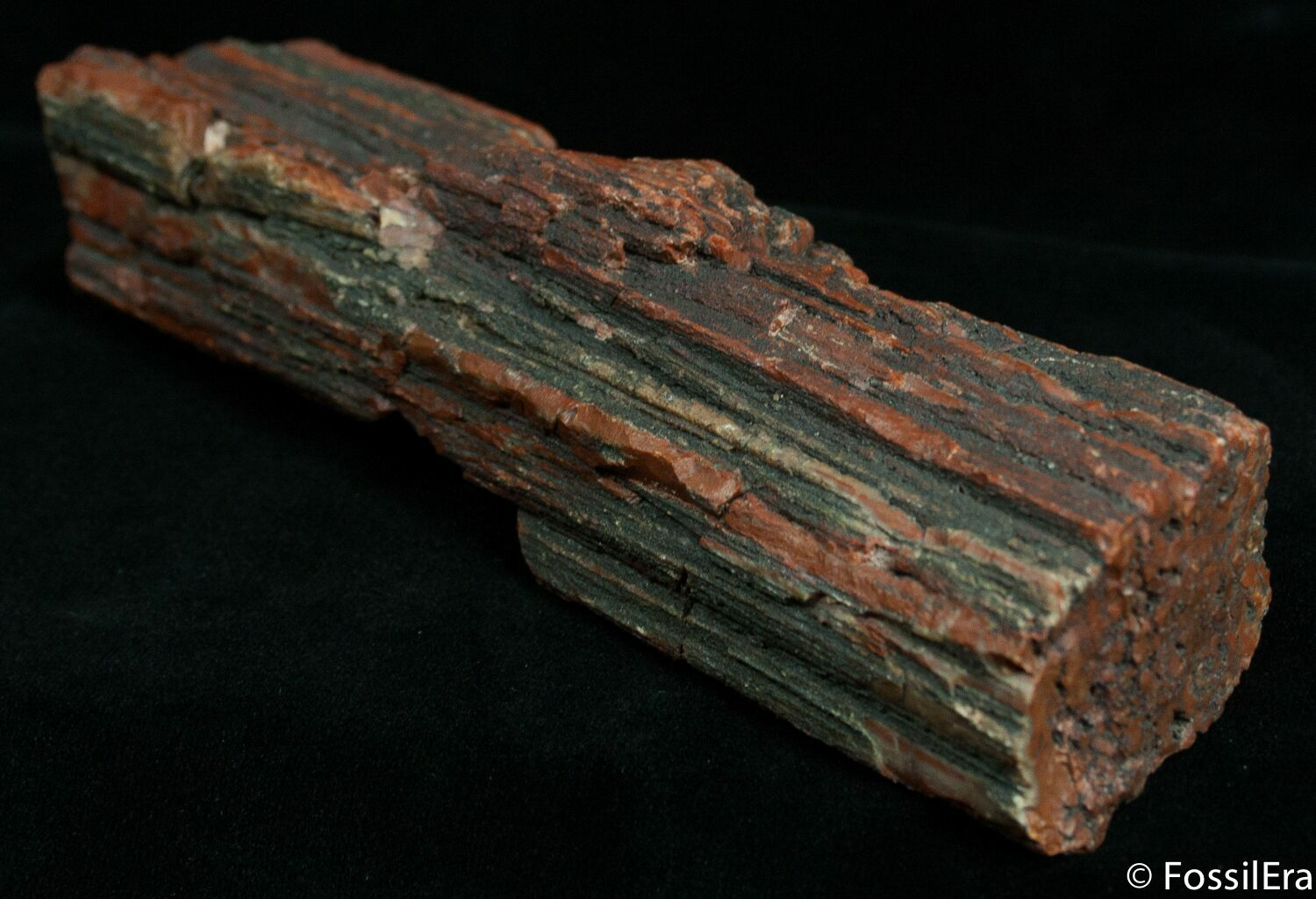 Rough Arizona Rainbow Petrified Wood 14 Oz For Sale