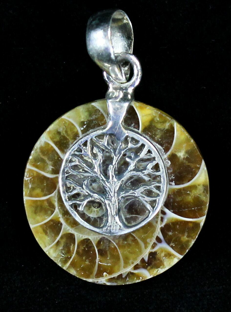 ammonite fossil pendant sterling silver for sale 21032